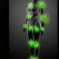 CANNABIS FOR FIBROMYALGIA MAY BE MORE EFFECTIVE THAN ANYTHING ON THE MARKET